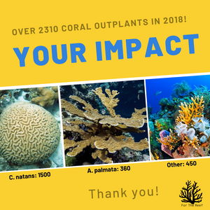 2310 Corals Outplants in 2018!