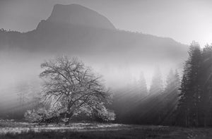 Yosemite Valley 1 Ref-SBW2109