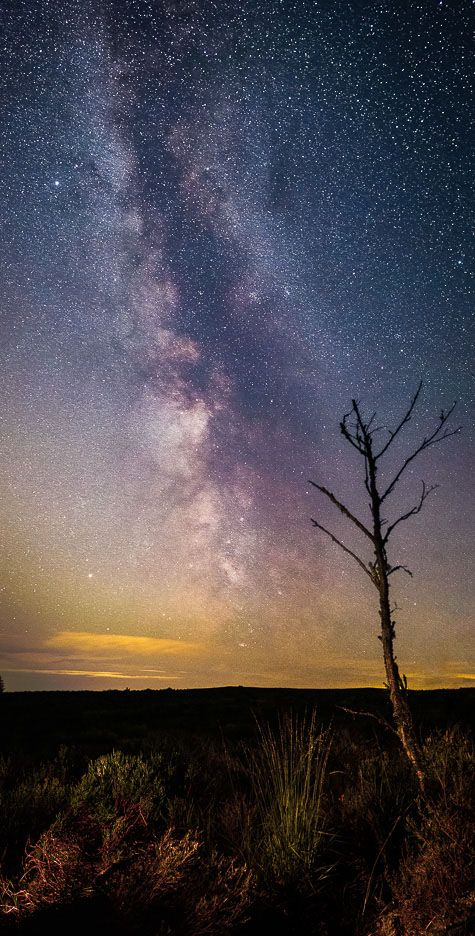 Thrunton tree Milky Way 2 Ref-SC2401