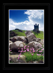 Flowers and rocks at Dunstanburgh Castle Ref-SCFRDC