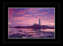 Saint Mary's purple dawn Ref-SC2084