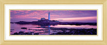 Saint Marys purple dawn 2 Ref-PC284
