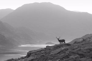 Knoydart morning Ref-SBW2075