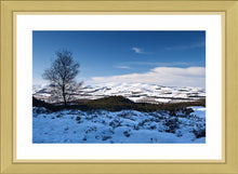 Winter Cheviots Ref-SC2118