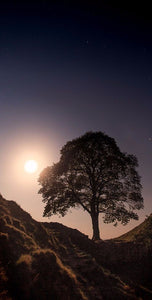 Sycamore Gap by moonlight Ref-SCSGBM