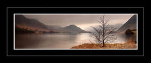 Crummock Water tree Ref-PC347
