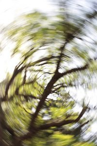 abstract-swirl-of-leaves-on-tree-200x300