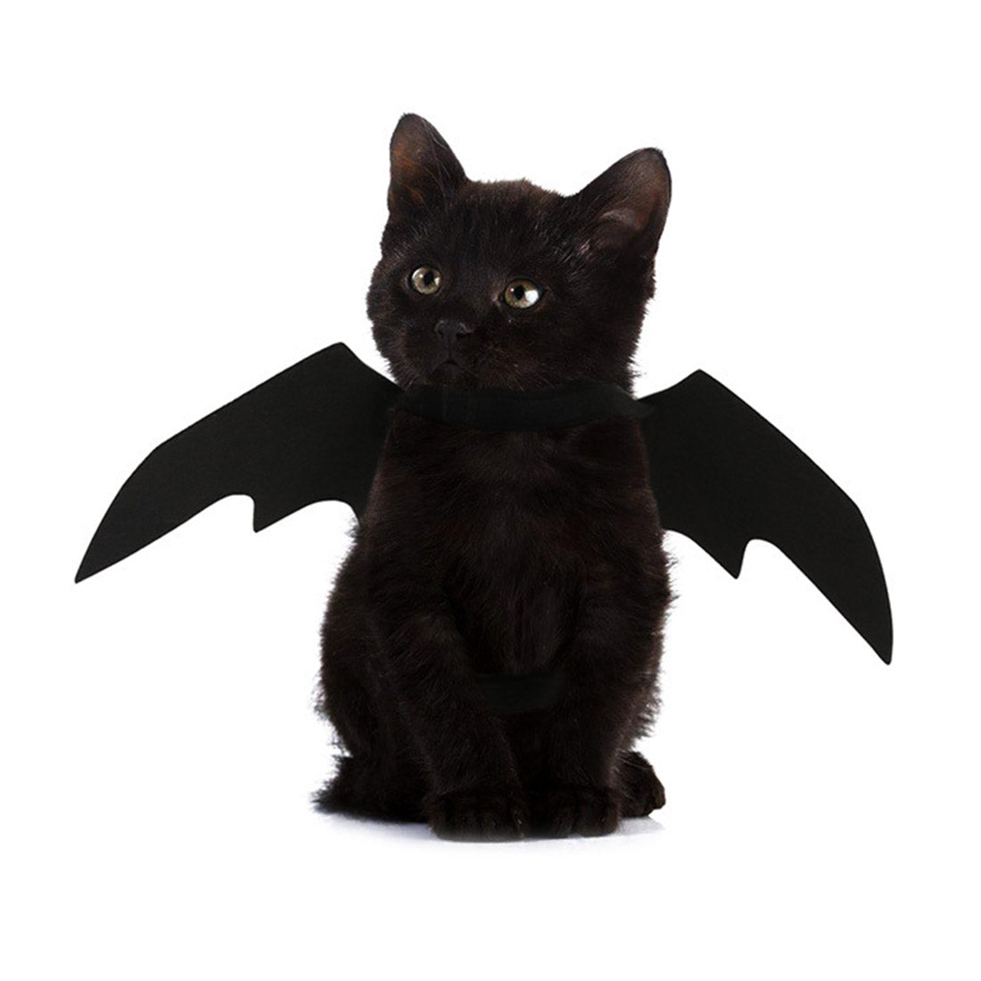 easy batwings cat halloween costume