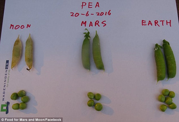 Crops successfully grown in Mars soil for the first time.