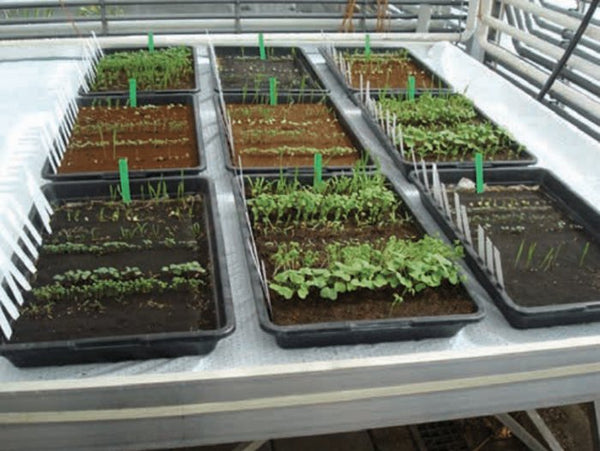 Vegetables grown in simulant Mars soil