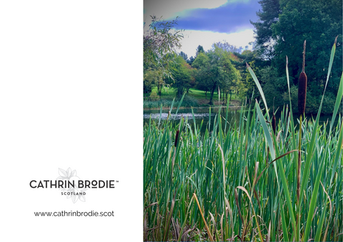 Bullrushes at Stirling - Greeting Card