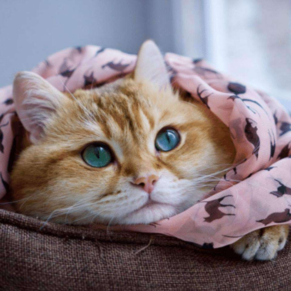 Foulard motifs Chats - Le chat Mallow