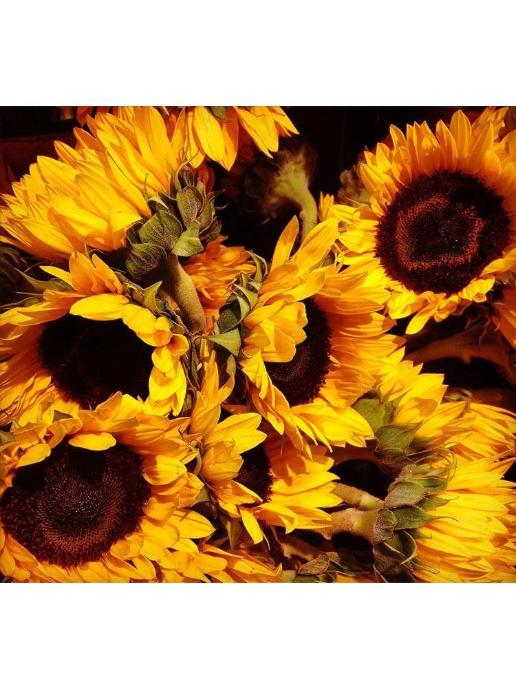 Rustic Sunflowers