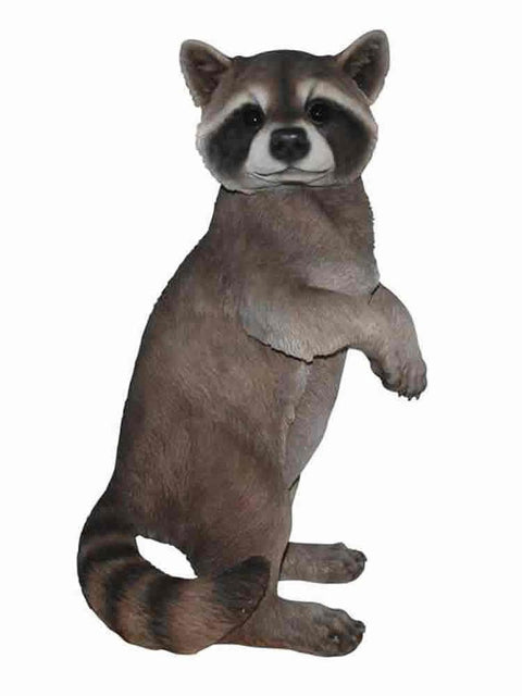 Standing Raccoon
