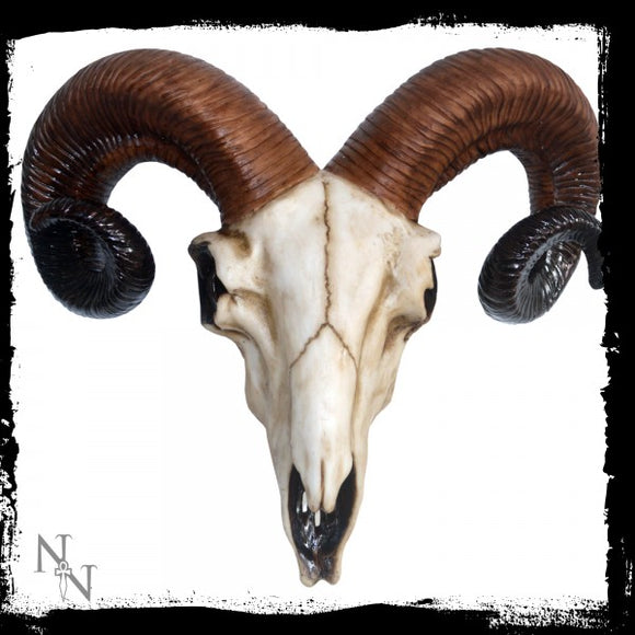 Rams Skull Medium 33cm