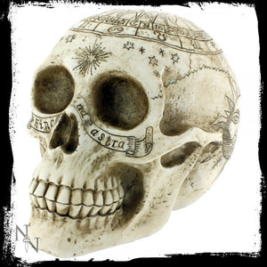 Astrological Skull 20cm - Gothic Fantasy Store