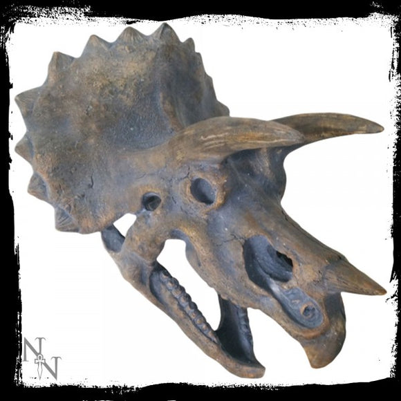 Triceratops Head Large 34.5cm - Gothic Fantasy Store