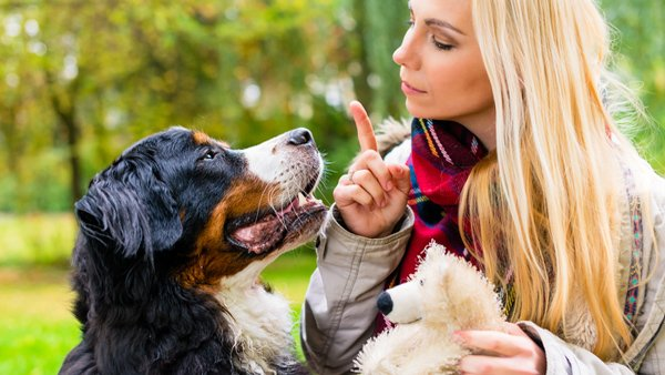 7 Commands To Teach Your Dog