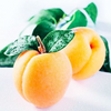11 BEAUTY BENEFITS OF APRICOT KERNAL OIL
