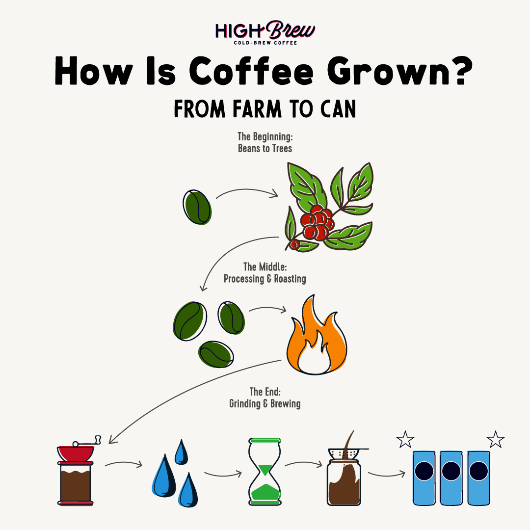 how is coffee grown infographic