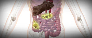 New Meta-Analysis Links Colon Cancer To Low Levels Of Vitamin E