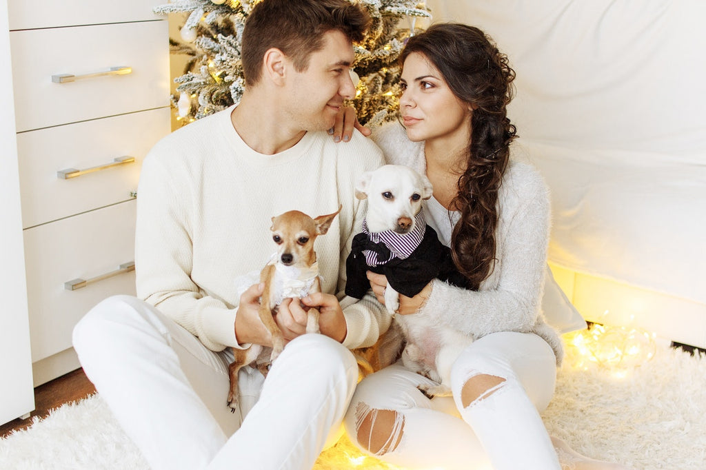 6 Tips For Taking Holiday Portraits With Your Pets