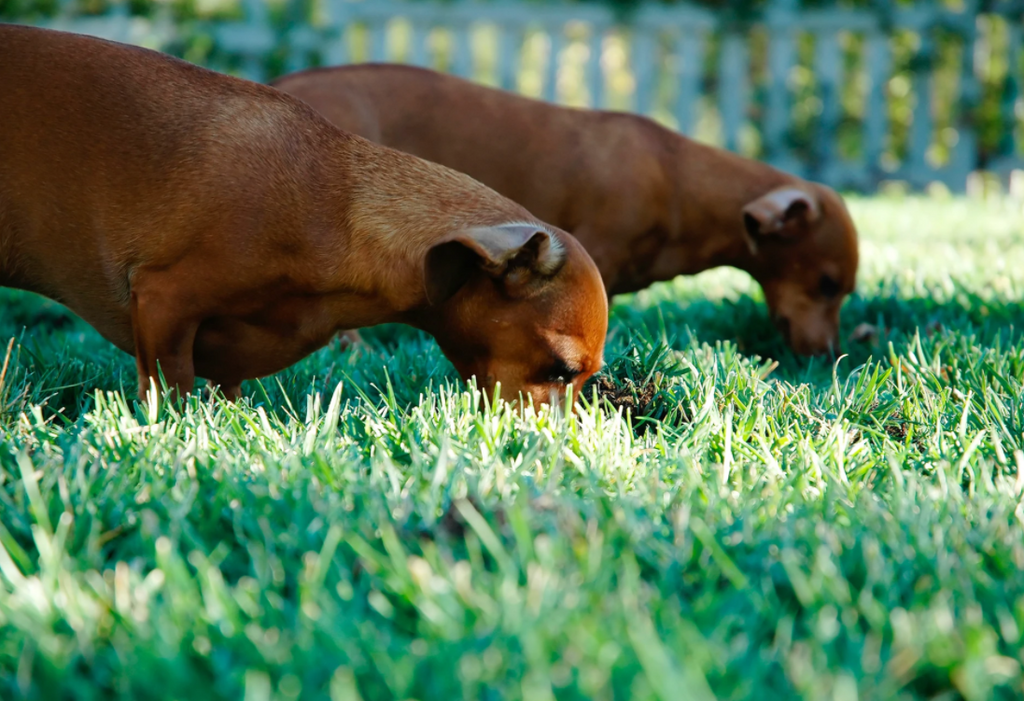 12 Dog Breeds That Love to Dig