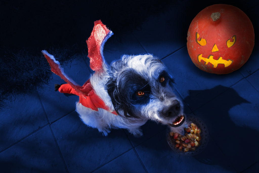 10 Scary Movies (with Dogs!) To Watch This Halloween