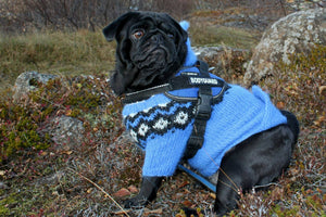 6 Top Winter Coats for Dogs