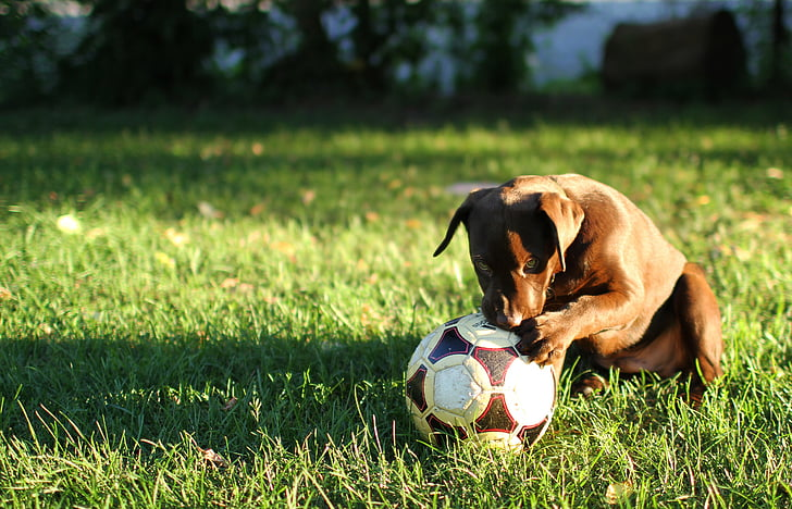 12 Fun Summer Activities To Do with Your Dog