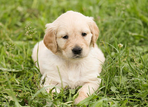 3 Quick Tips to Potty Train Your New Puppy