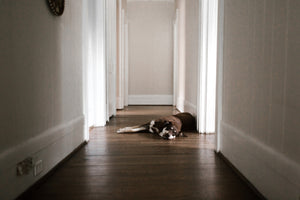 Signs of Seasonal Affective Disorder in Pets