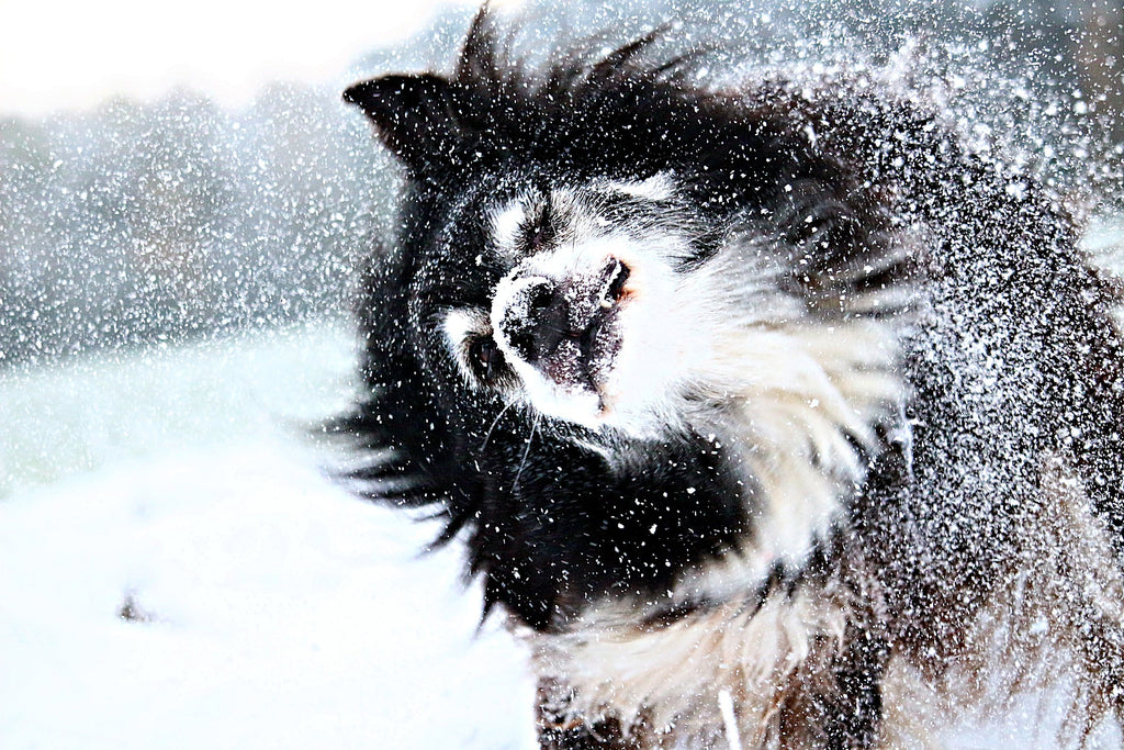 5 Ways to Keep Your Dog Warm in the Winter