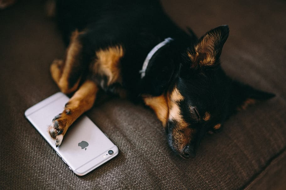 20 Best Apps to Download for Dog Owners (Updated 2020)