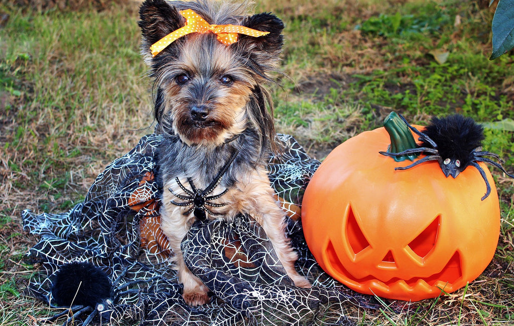 5 Best Places to Purchase a Dog Halloween Costume