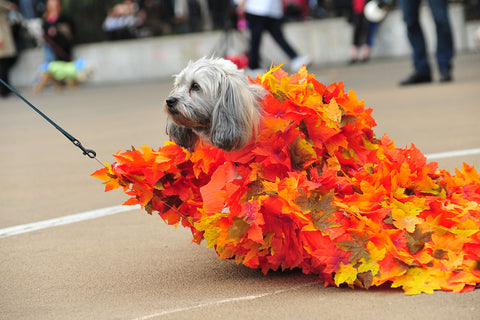 dog in fall leaf halloween costume