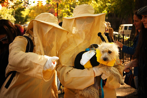 dog bee and bee keeper halloween costume