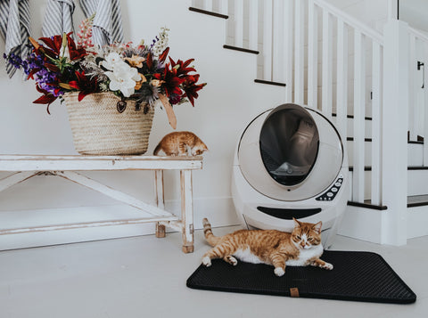 cats in font of litter box