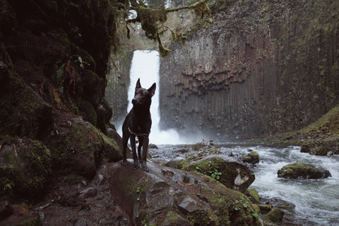 Dog standing at waterfall