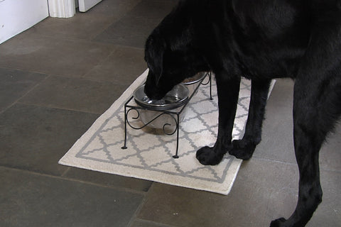 black lab dog using elevated feeder bowl