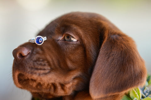 Puppy with wedding ring