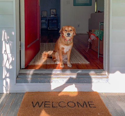 Dog at front door