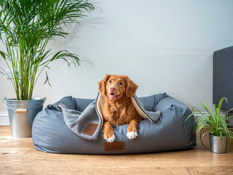 Dog laying in dog bed