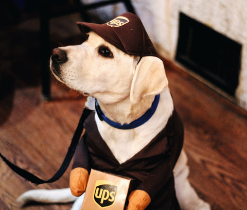 yellow lab in ups dog costume