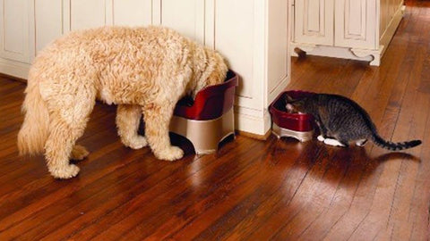 Dog and cat in kitchen with Neater Feeder