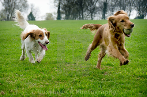 two dogs playing in a field