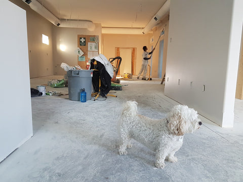 Dog in room being painted