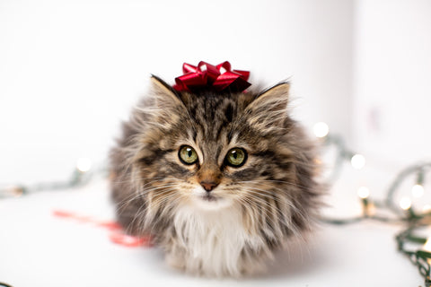 cat with Christmas bow