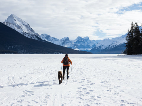 dog skiing with owner