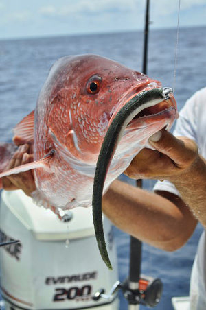 Pro Talk: Jigging Soft Baits for Gulf Red Snapper